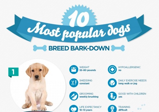 most-popular-dogs