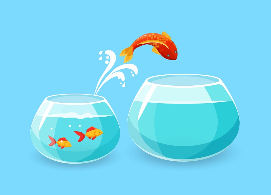 goldfish_and_infographic_design